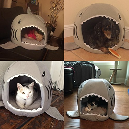 Shark Cat and Dog Cave-FurrysWorld