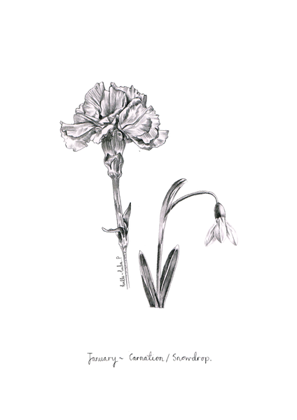 January Birth Flower