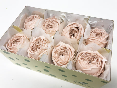 Garden roses catherine - Nude pink