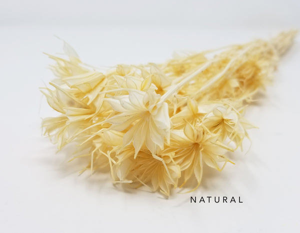 Dried Nigella - Natural