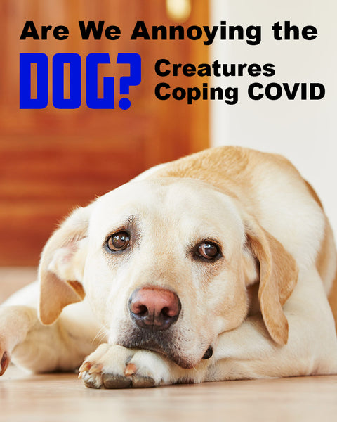 Are We Annoying the Dog? Creatures Coping COVID