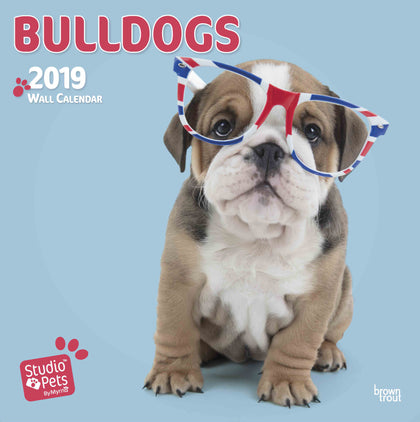 Bulldogs by Studio Pets Square 2019 Calendar