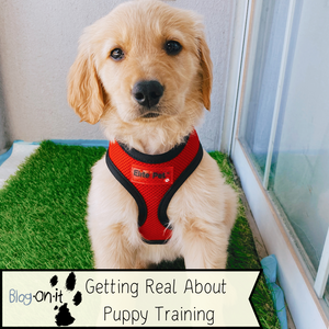 Getting Real About Puppy Training