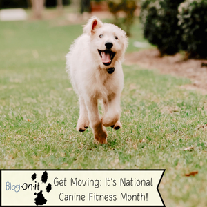 Get Moving: It's National Canine Fitness Month!