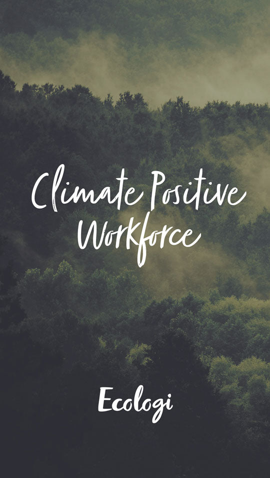 Climate Positive Workforce with Ecologi with image with trees in the mist
