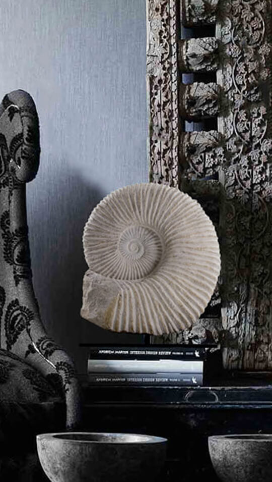 Interior ammonites on stands