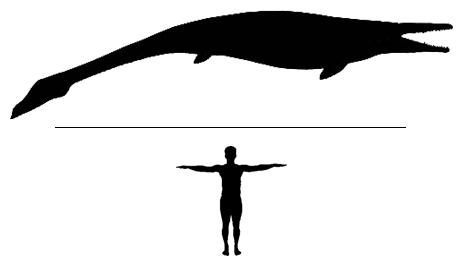 Mosasaur Halisaurus Scale to man