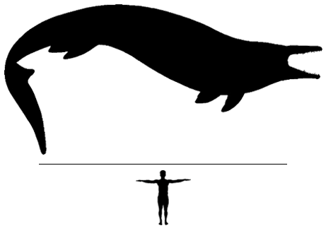 Mosasaur Beaugei scale to man