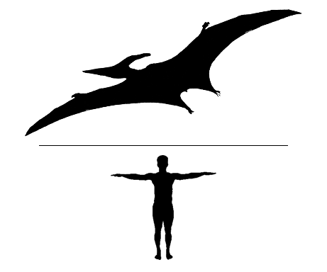 Odontopteryx flying reptile scale to man