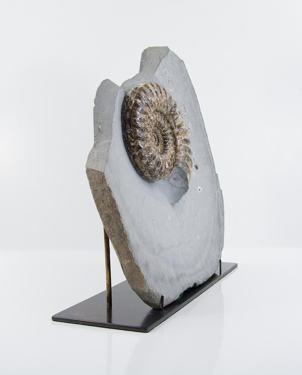 Fossil ammonite in stone on a bronze plinth