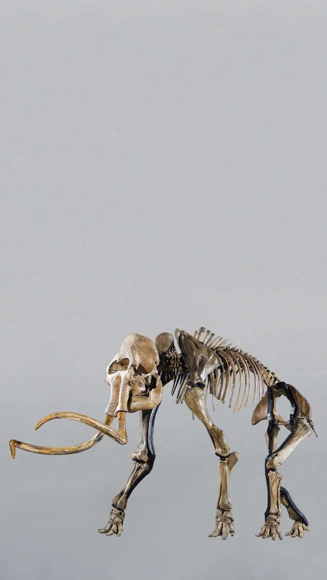 Woolly Mammoth Skeletons 2.2M+