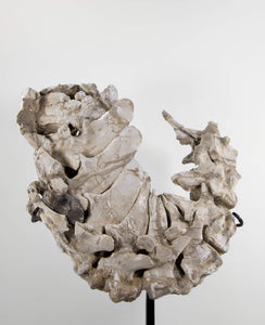 Dyrosaurus Phosphaticus Crocodile Vertebrae on Bronze 440mm