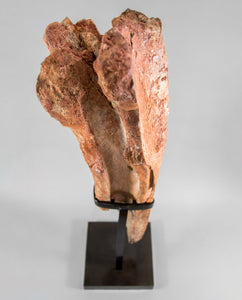 Museum-quality Spinosaurus aegyptiacus dinosaur fossil tibia bone for sale measuring 2.7 feet on a custom-designed stand