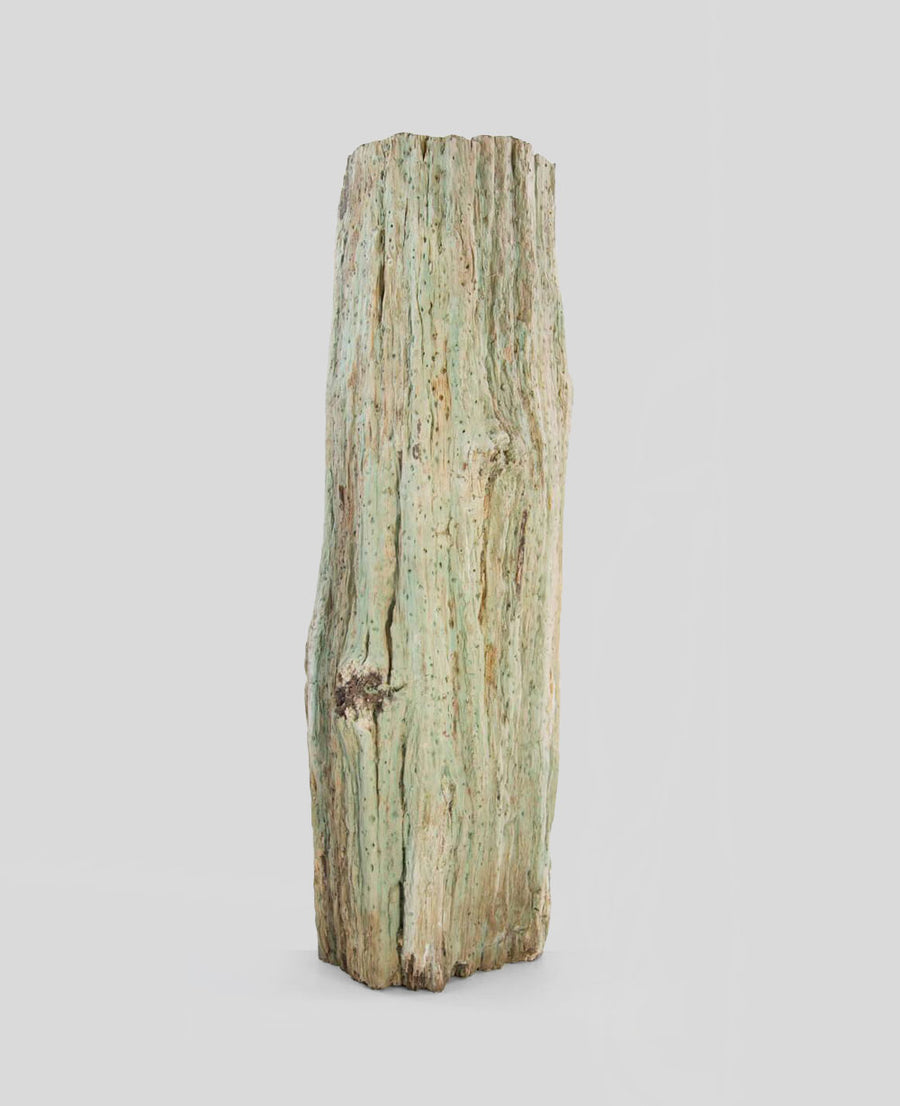 Petrified Araucaria Tree Trunk 1m