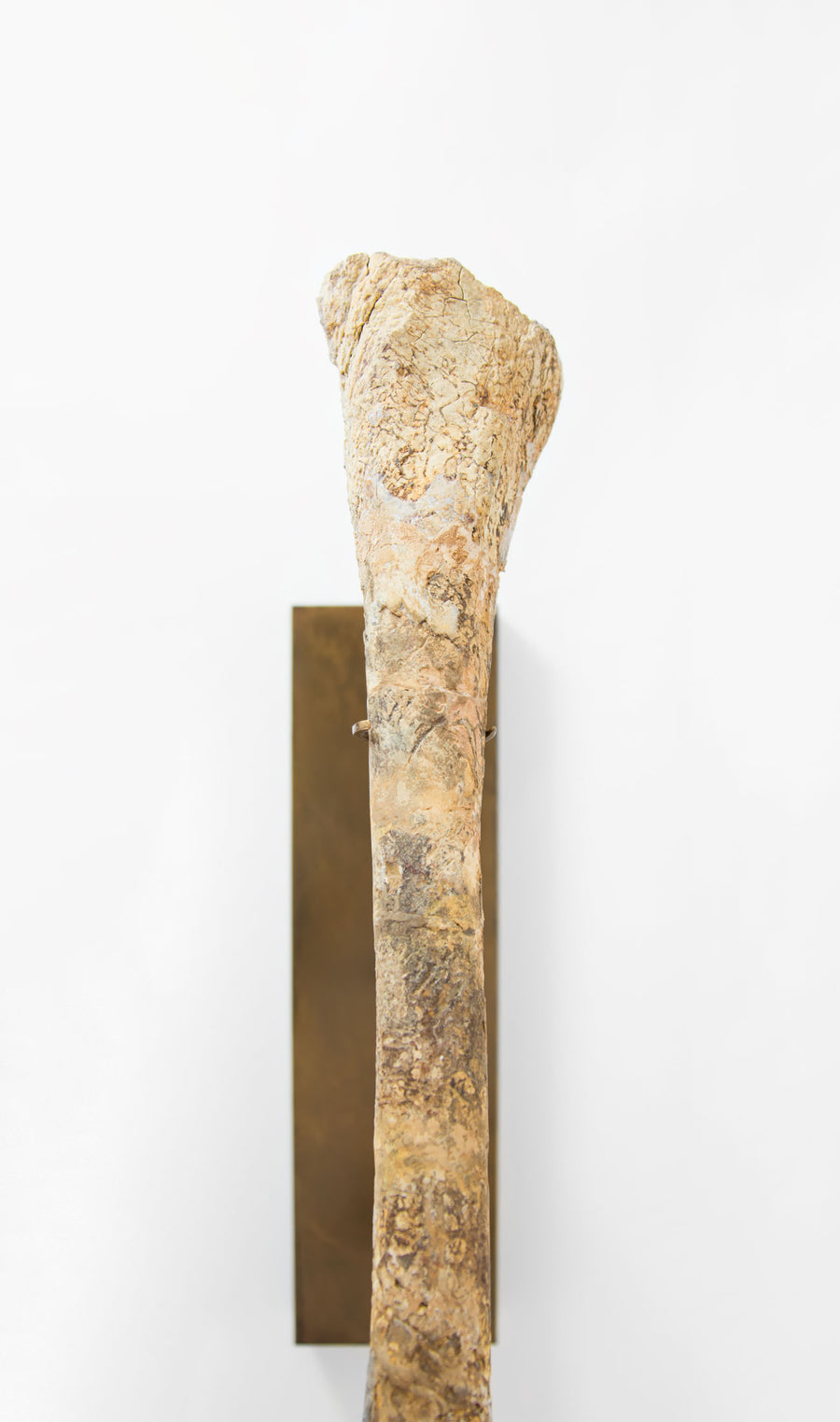pterosaur wing bone on a bronze stand