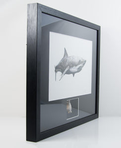 Framed Obliquus Shark Tooth 410mm