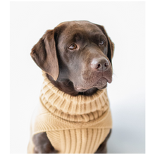 Load image into Gallery viewer, The Jazz Dog Jumper in Camel
