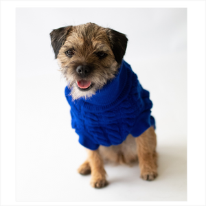 The Rascal Dog Jumper in Blue