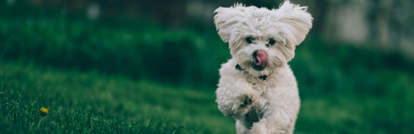 A raw keto diet can improve dog health and help treat dog cancer