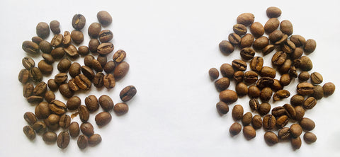 Green coffee beans from Zambia roasted on a Behmor 2000