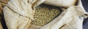 bean green coffee in burlap ready to roast at home