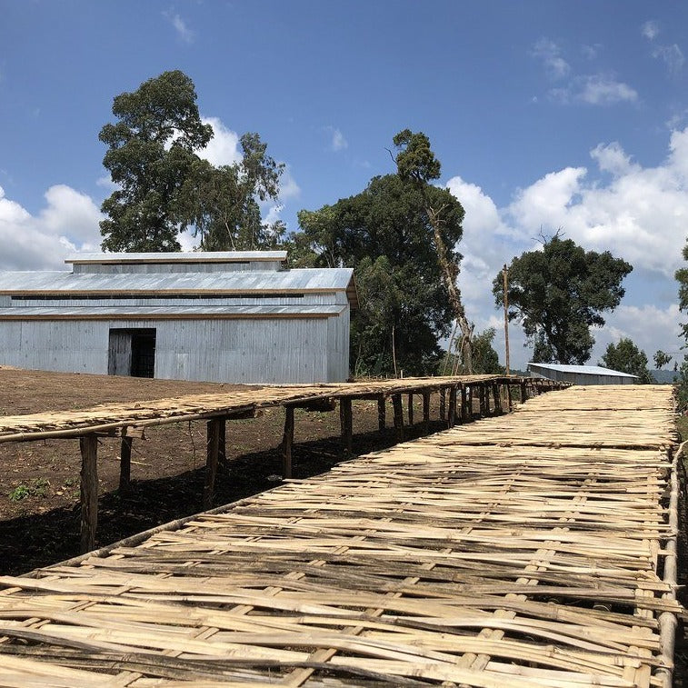 straw raised drying beds for drying coffee at the Dame Dabaya coffee mill in Guji Ethiopia