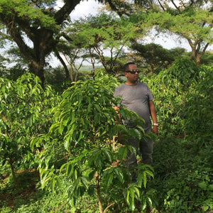 artisan coffee farmer ibrahim hussein inspects plants to ensure high quality