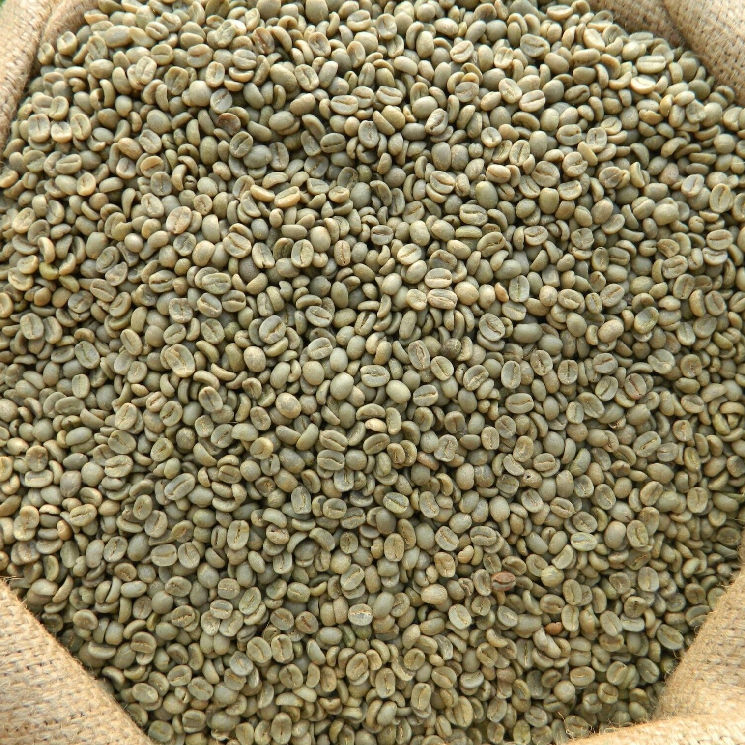 green coffee beans from ethiopa; these beans are best enjoyed as a light roast