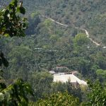 coffee farm in guatemala growing coffea arabica of the bourbon and caturra varietals