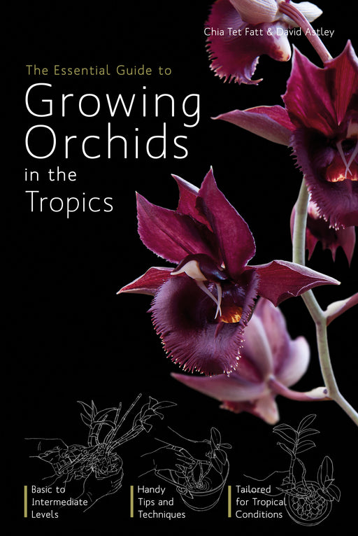 The Essential Guide to Growing Orchids in the Tropics