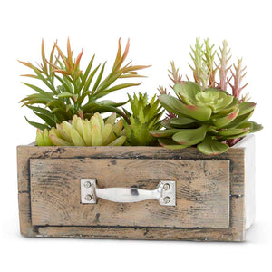 Succulents Planted in Small Wooden Rectangle Drawer
