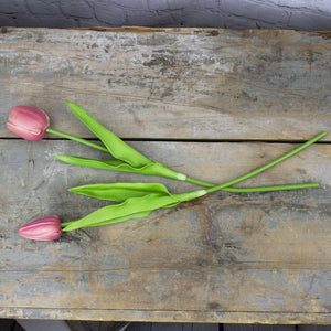 Honey and Me - Large Dark Pink Tulip Stem Set