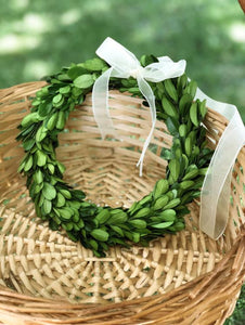 PRESERVED BOXWOOD WREATH - ROUND or SQUARE W/ RIBBON - 8