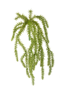 Plant Hassle Fern
