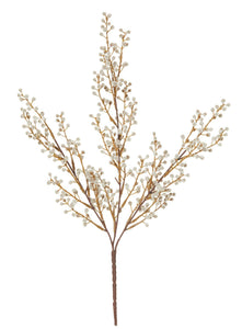 Plant Mini Willow Bush