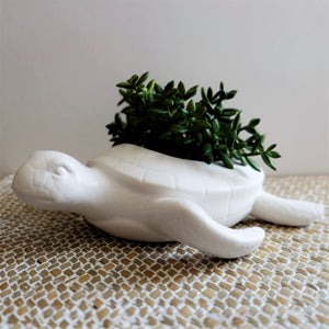 Terry Turtle Planter