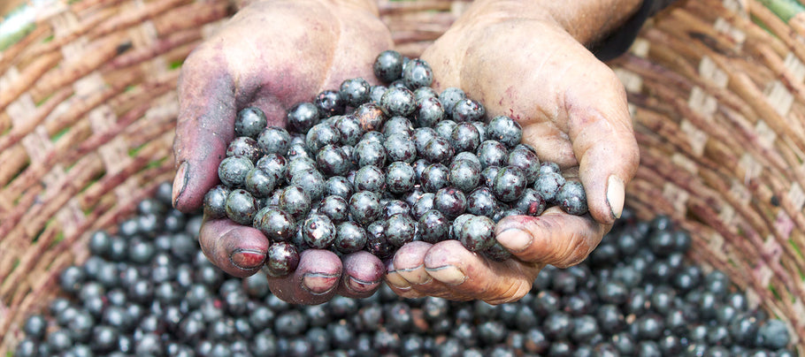 What Are Acai Berries?