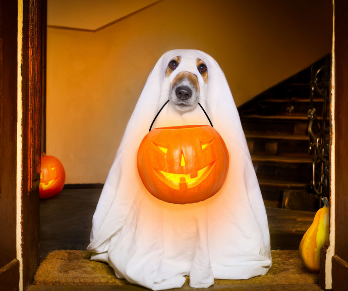 13 Tricks to Keep Your Dog Safe This Halloween