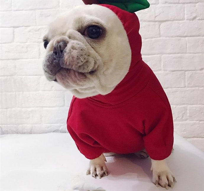 Fruit Costume for Dogs