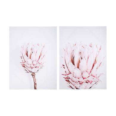 Protea Print 2 Pack