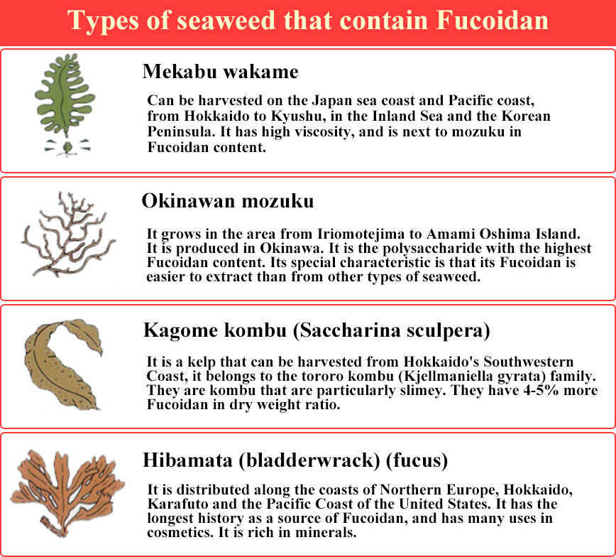 Type of seaweed contains fucoidan