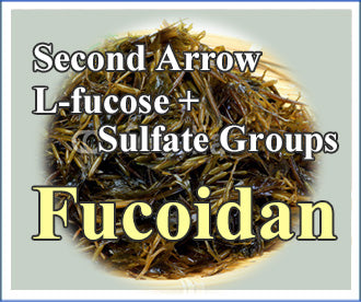 Second arrow L-fucose + Sulfate Groups  FUCOIDAN