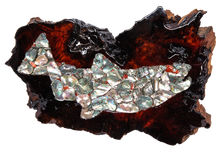 Load image into Gallery viewer, Salmon in Abalone