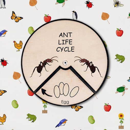 Minisko Learning Wheel Animal Lifecycle Ant