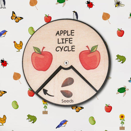 Minisko Learning Wheel Plant Lifecycles Apple