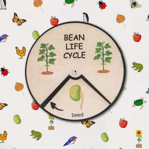 Minisko Learning Wheel Plant Lifecycles Bean