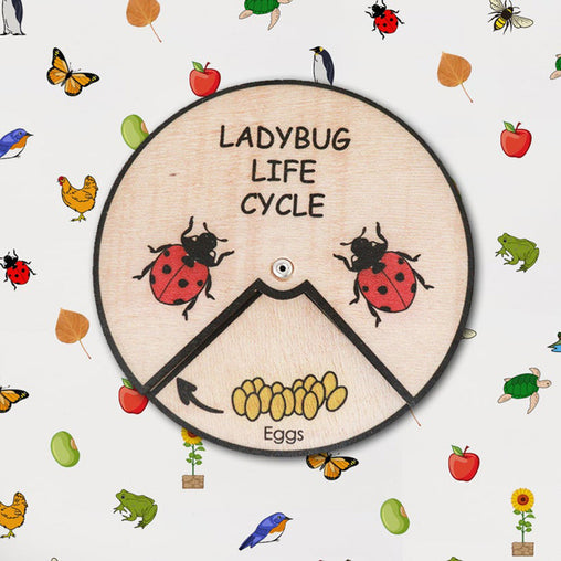 Minisko Learning Wheel Animal Lifecycle Ladybug