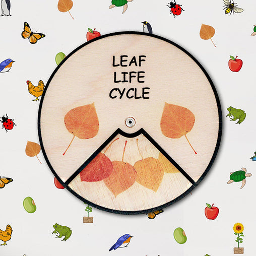 Minisko Learning Wheel Nature Lifecycles Leaf