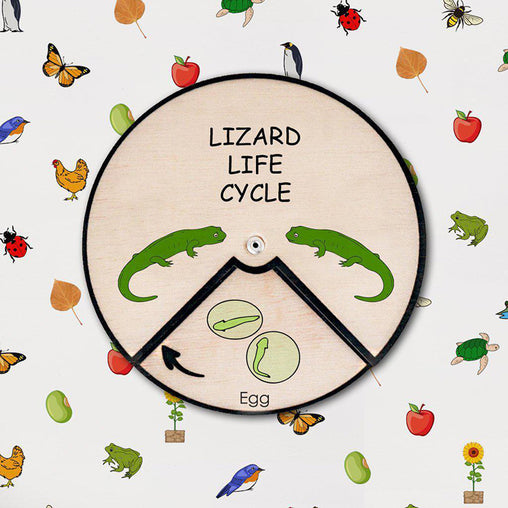 Minisko Learning Wheel Animal Lifecycle Lizard