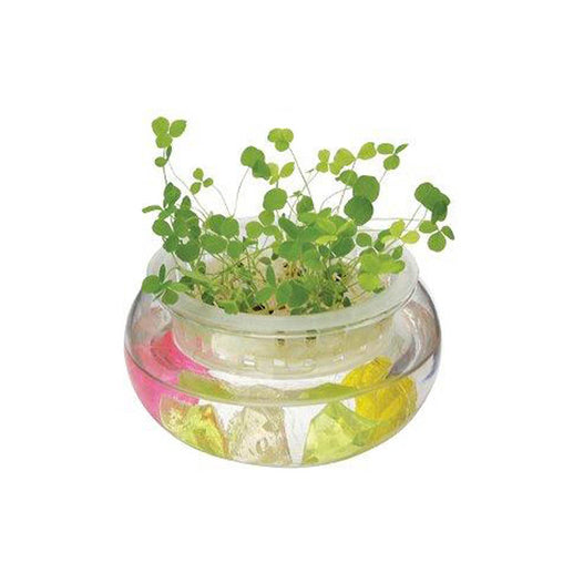 Mrs Green Mini Water Garden